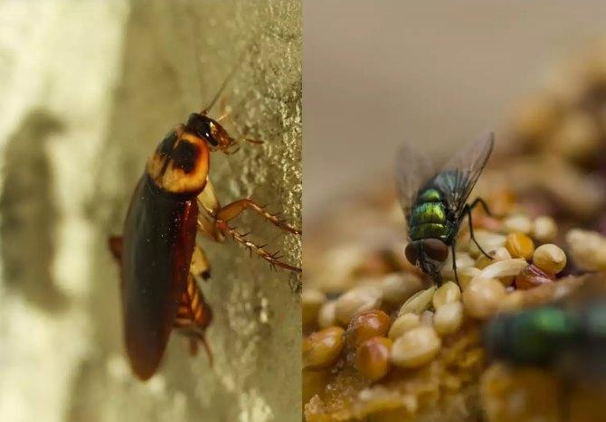 ပိုးဟပ်နဲ့ သင့်အစားအစာအနီးနားက ယင်ကောင်