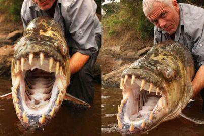10-dangerous-fishes.jpg