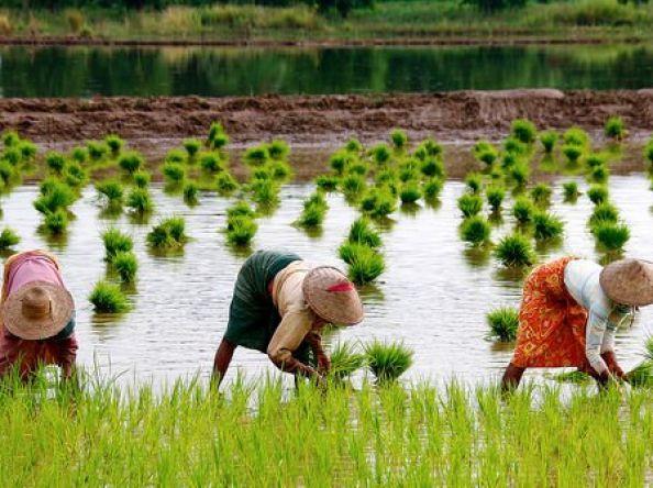 ဖွံ့ဖြိုးဆဲနိုင်ငံတွေက အမျိုးသမီး (၄၀) ရာခိုင်နှုန်းကျော်ဟာ လယ်ယာလုပ်ငန်းကို လုပ်ကိုင်နေရတယ်လို့ ကုလသမဂ္ဂပြော