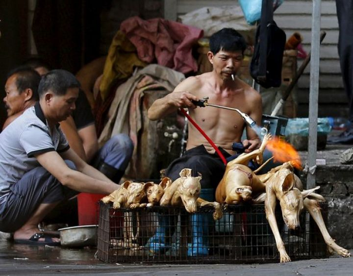 A-butcher-grills-a-butchered-dog-at-a-slaughter-house-at-a-dog-meat-market-in-Yulin.jpg