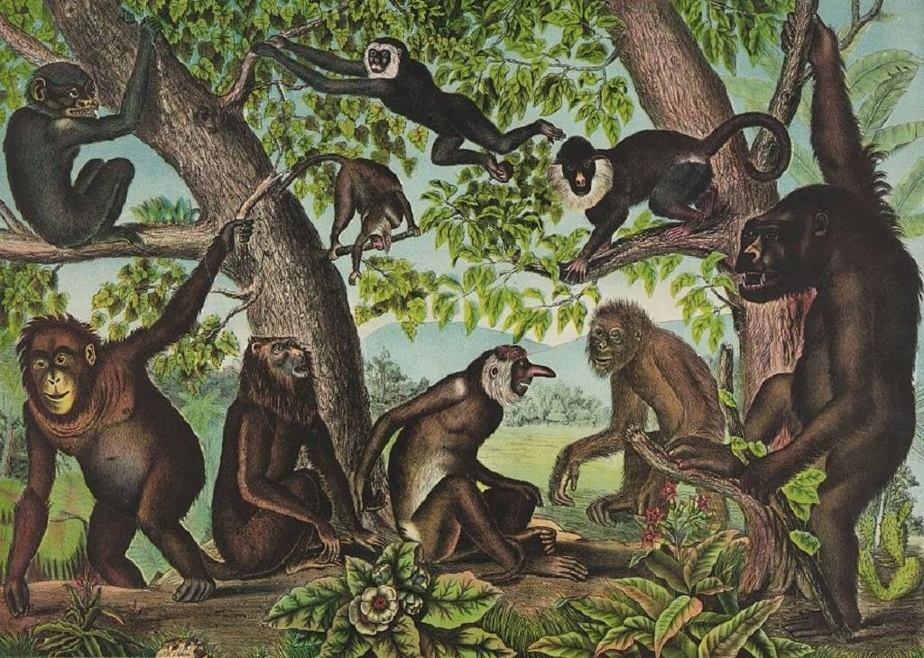 Copy-of-Monkeys.jpg