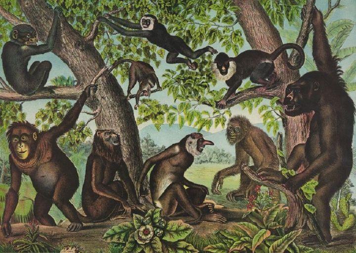 Copy-of-Monkeys.jpg