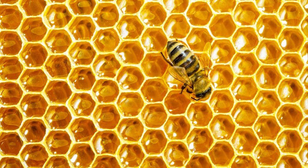 HoneyHeader1.jpg