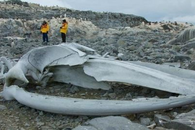 Whalebone.jpg