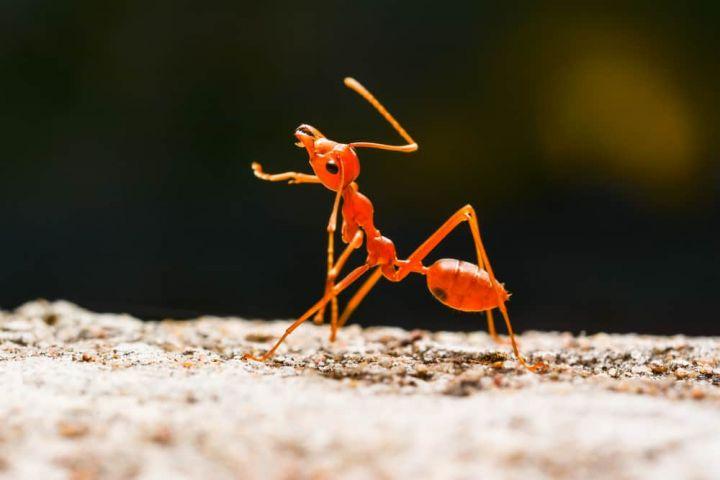 ant-legs.jpg