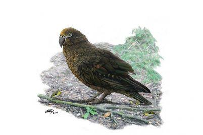 bird03-3.jpg