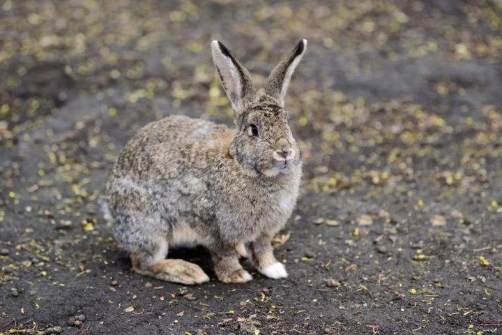 close-big-rabbit-PEF3R5C-e1565753116862.jpg