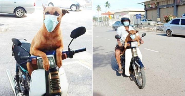 dog-image.jpg