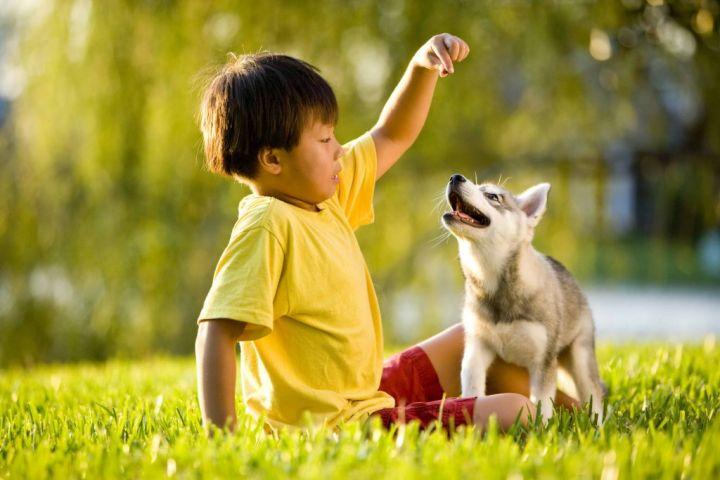 dog1-1-e1553483822913.jpg