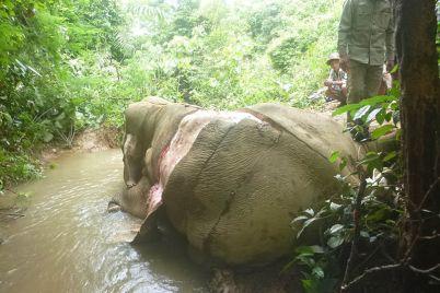 elephant-large.jpg