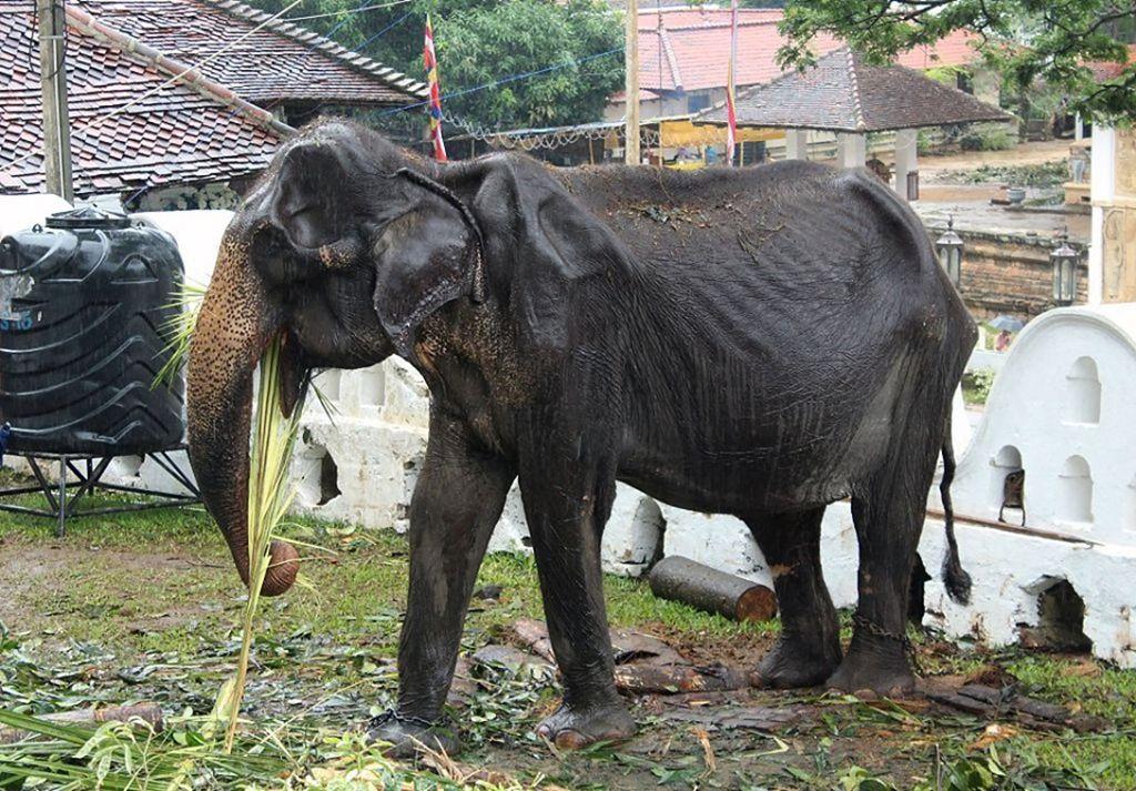 elephant03.jpg