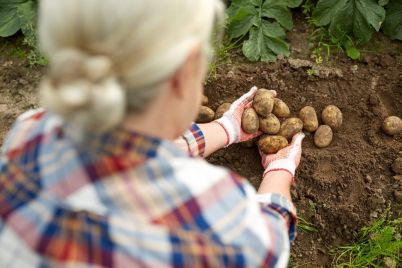 farmer-with-potatoes-at-farm-garden-PC7HFEQ-e1565530937270.jpg