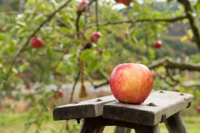 fresh-apple-tree-scaled.jpg