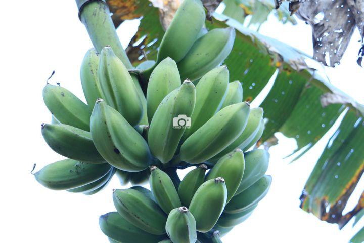 green-banana-large.jpg