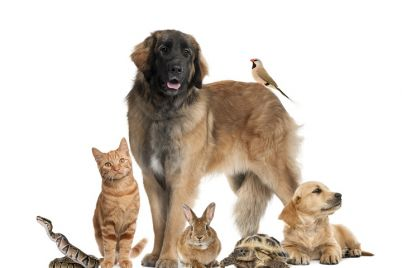 group-of-pets-PZY3ZLY.jpg