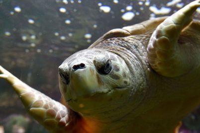 http-_i2.cdn_.cnn_.com_cnnnext_dam_assets_170825135519-1-sea-turtle-super-169.jpg