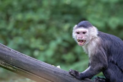 monkey-a-portrait-PKRBF69-e1564403285268.jpg