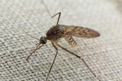 mosquito-trying-to-bite-through-cloth-V3QDX5U.jpg