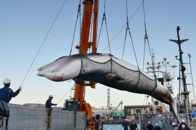 og-crop-japan-whaling-gettyimages-842662572.jpg