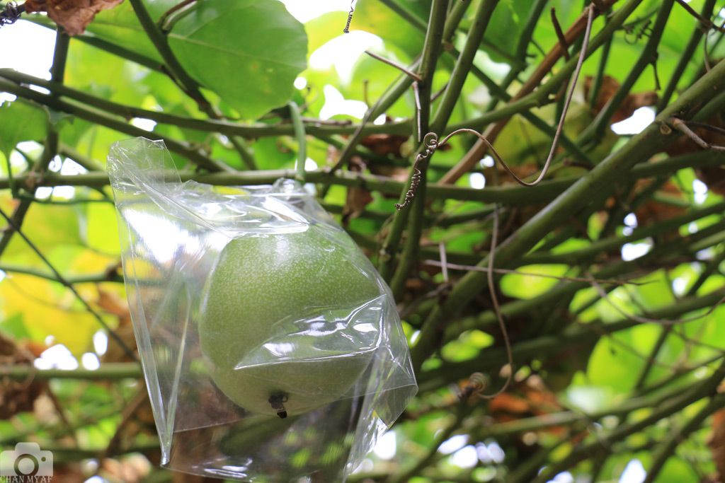 passion-fruit-large.jpg