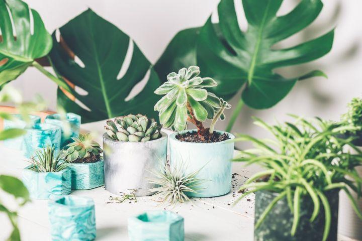 planting-succulent-plant-in-pot-6E4FB92.jpg
