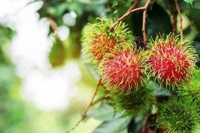 red-rambutan-with-the-sun-shine.jpg