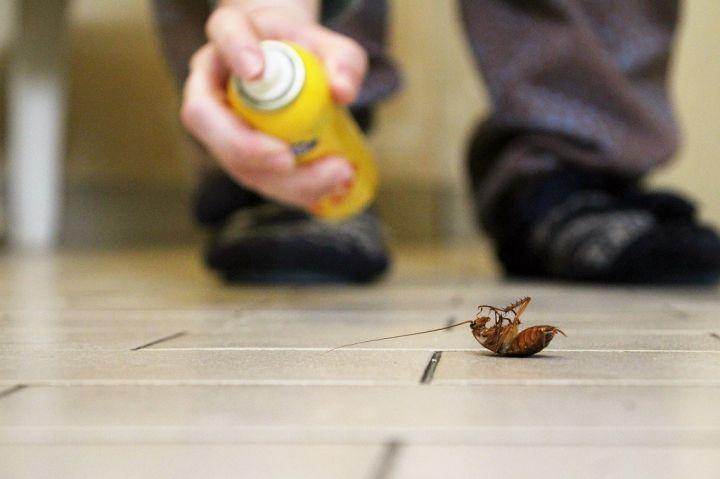 roach-1.jpg