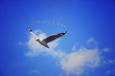 seagull-02.jpg