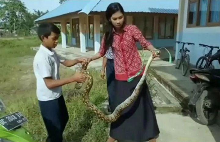 snake01.jpg