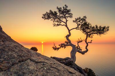 tree-PBEVKRU.jpg