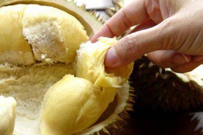 yyl-durian-large.jpg