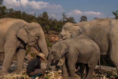 yyl-elephant01.jpg